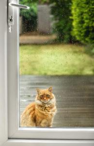 cat in need of door repair